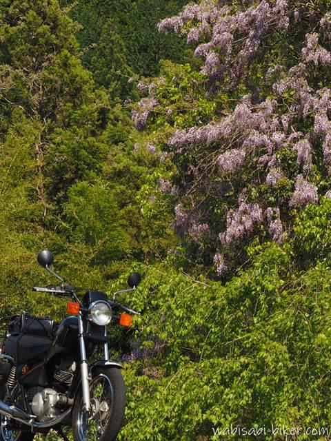 藤の花とオートバイ