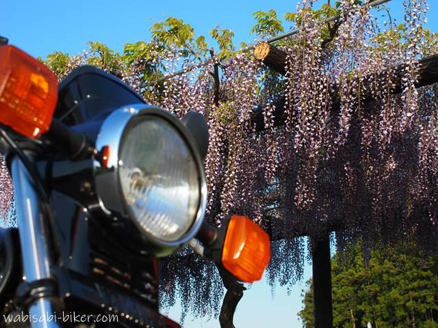バイクと藤の花
