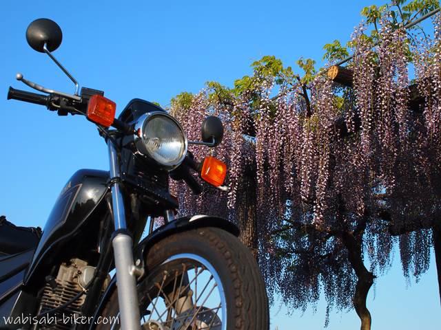 オートバイと藤の花