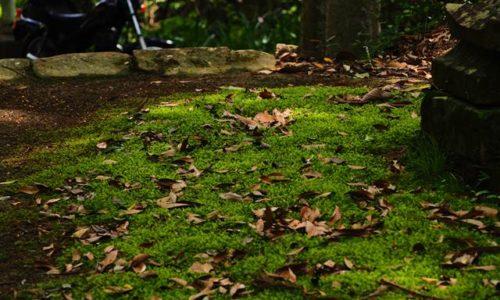 苔と落ち葉とオートバイ