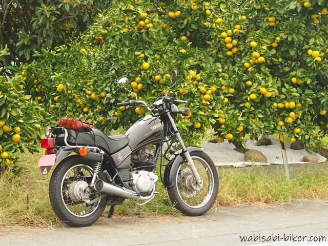 バイク写真 ミカンとオートバイ