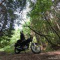 林道でバイク写真撮影☆自分撮り・セルフタイマーによる走行写真に挑戦