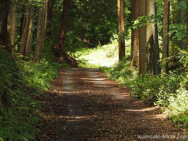 東光寺本堂前の林道