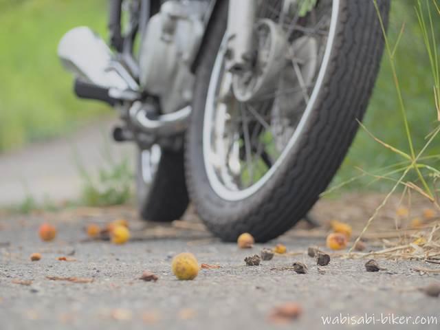 落ちた梅の実とオートバイ