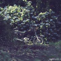 アジサイとオートバイ