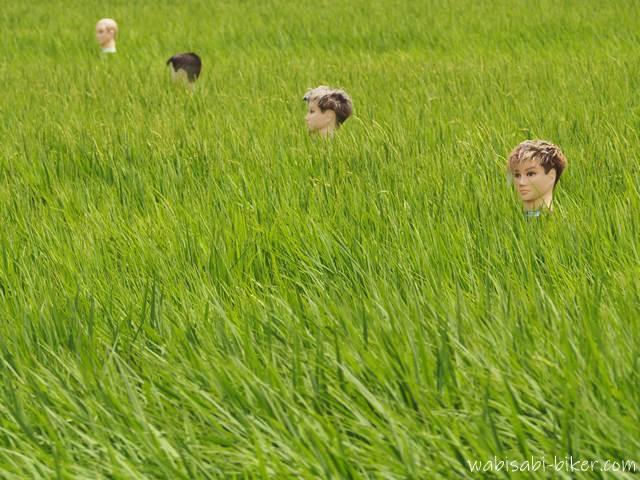 田んぼの首だけカカシ