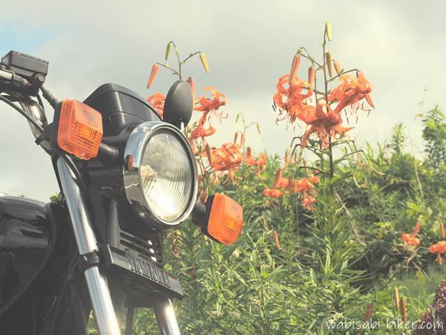 オニユリとオートバイ
