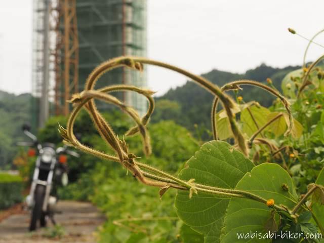 葛の蔓とオートバイ