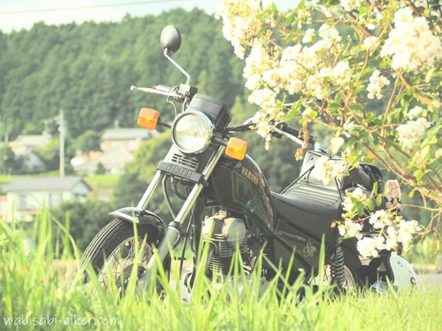 白いサルスベリの花とオートバイ