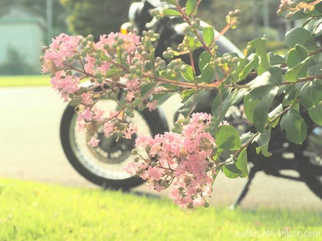 サルスベリ(百日紅)とオートバイ