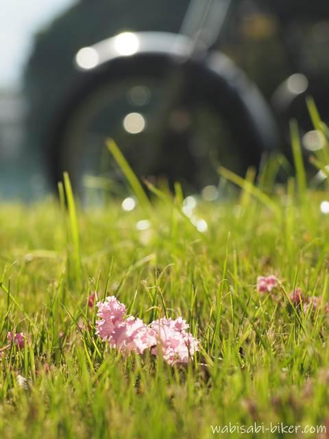 落ちたサルスベリの花とオートバイ