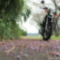 雨に降られてバイク写真★葛(クズ)の花びらと