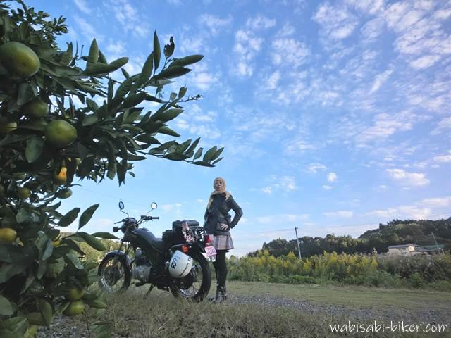 みかん畑とオートバイと女性ライダー