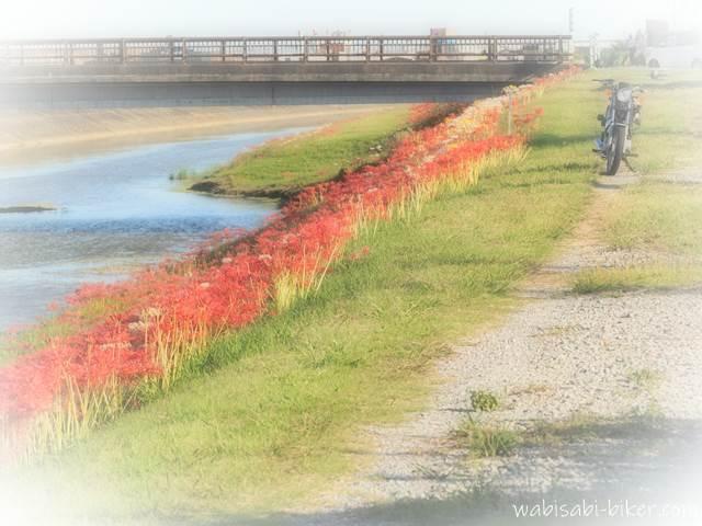 川沿いの彼岸花とオートバイ