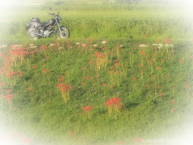 土手の彼岸花とオートバイ