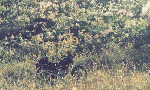 ススキとセイタカアワダチソウとオートバイ