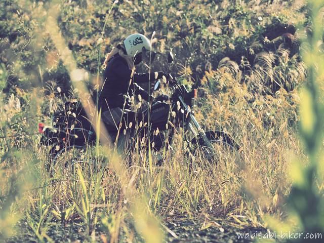 ネコジャラシ 秋の野草の中の女性ライダー
