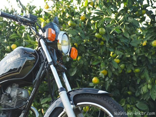 オートバイとミカン畑