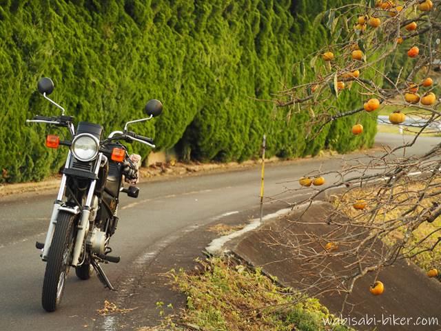 柿とオートバイ