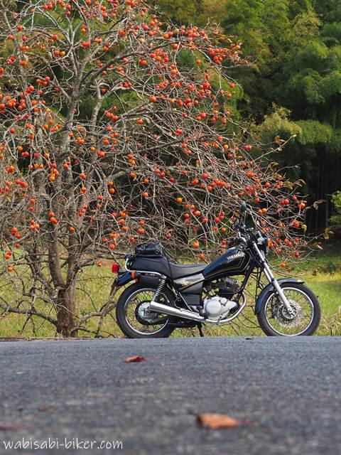 柿の木とオートバイ