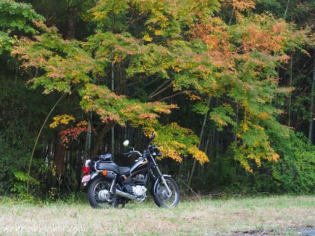 紅葉のグラデーションとオートバイ