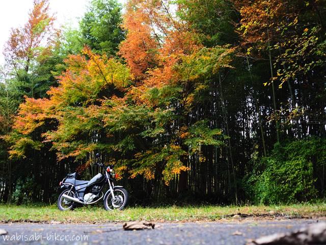 紅葉とオートバイと落ち葉