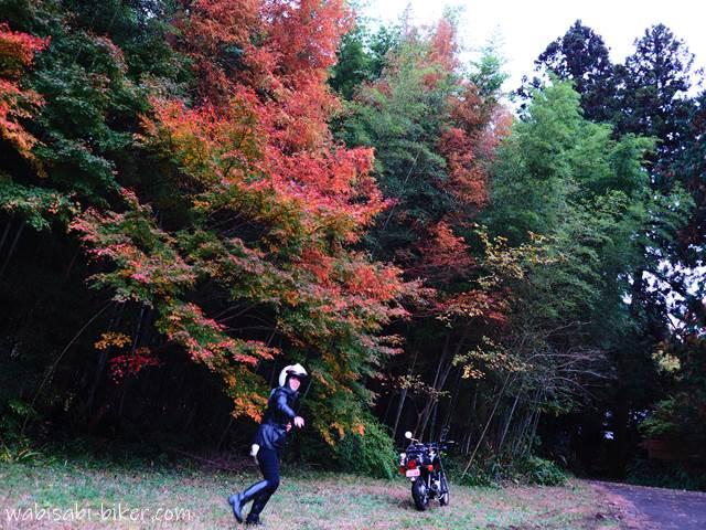 紅葉とバイクと女性ライダー