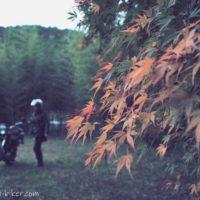 紅葉と他撮り風バイク写真
