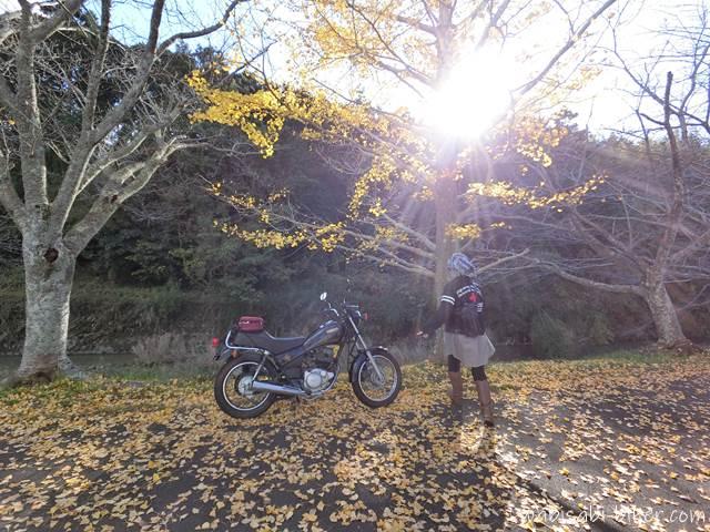 イチョウとオートバイと自撮り