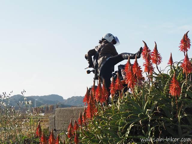 アロエの花とオートバイを跨ぐ女性ライダー
