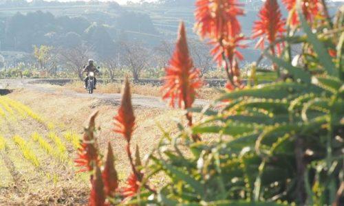 バイク写真 アロエの花とオートバイ