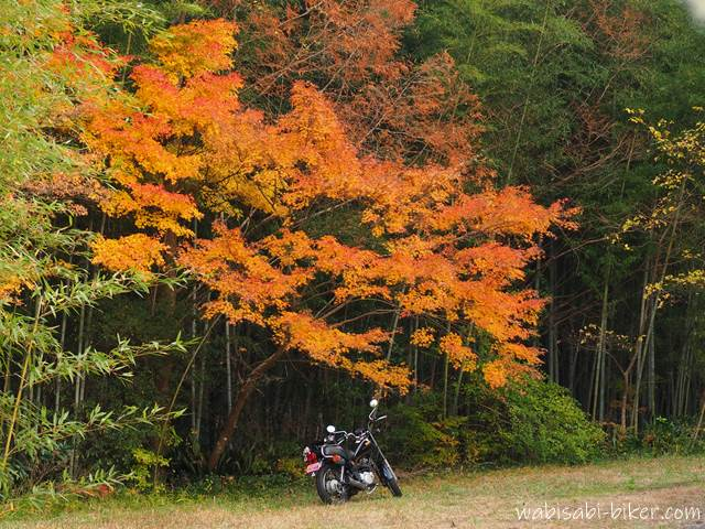 冬紅葉とオートバイ