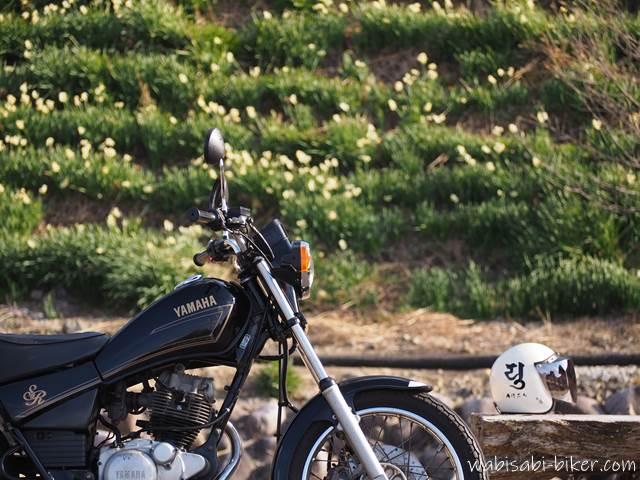 バイク写真 スイセンを背景にしたオートバイとヘルメット