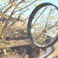 冬の花植物とのバイク写真を集めてみた