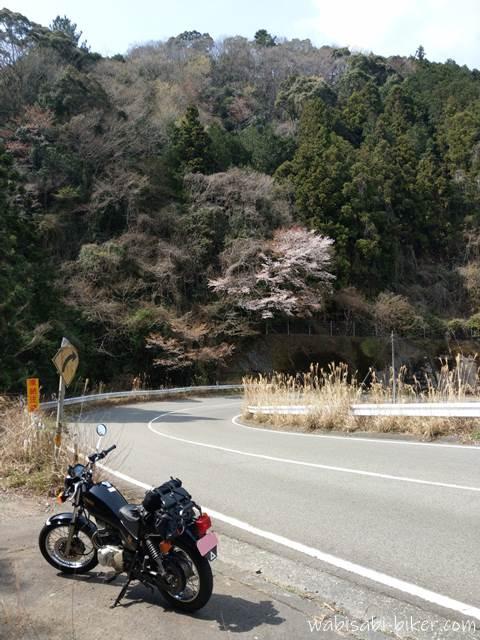 山道のカーブに咲く桜とオートバイ