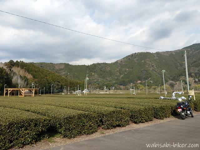 茶畑の屋外アートとオートバイ