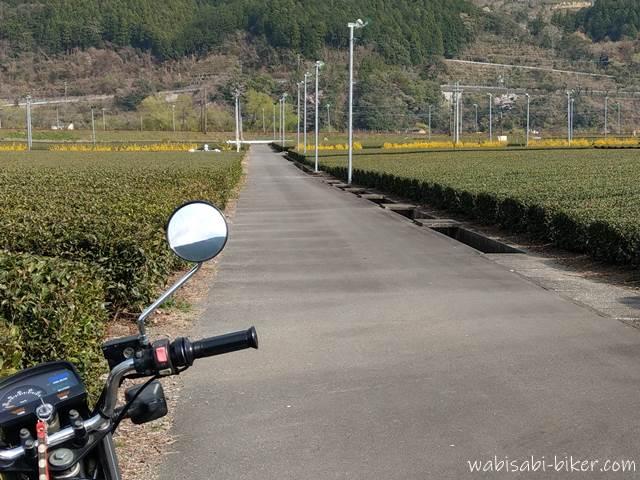 茶畑とレンギョウとオートバイ
