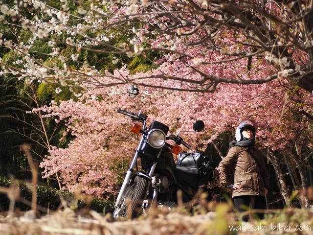 梅と早咲き桜とオートバイ 自撮り