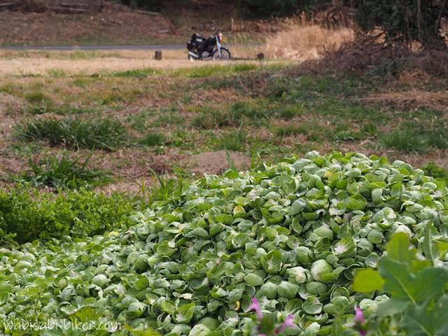 芽キャベツとオートバイ