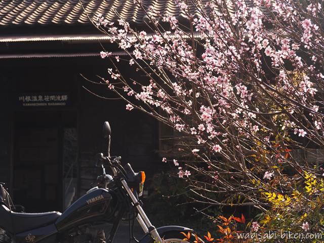 春の花とオートバイ