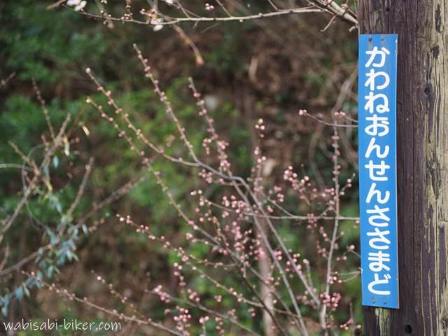 川根温泉笹間渡駅と花のつぼみ
