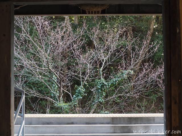 川根温泉笹間渡駅 駅舎から見た花のつぼみ