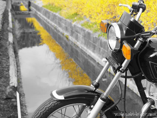 レンギョウとオートバイ
