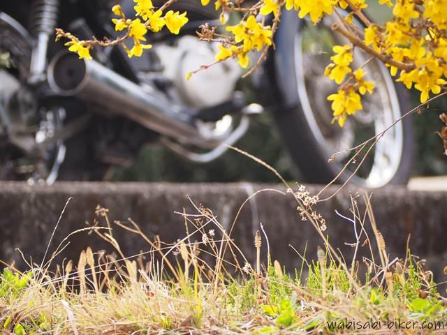 レンギョウとツクシとオートバイ