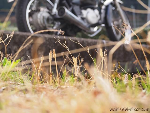 ツクシとオートバイ