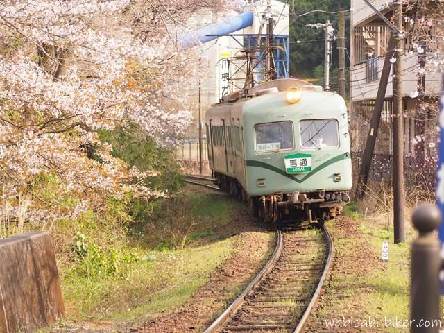 大井川鐵道 桜と普通電車