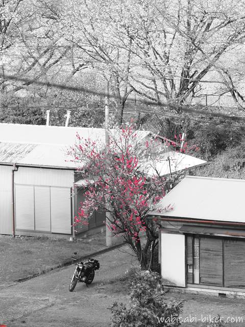 源平桃とオートバイとレトロ住宅