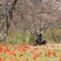 屋外アートとバイク写真撮影☆無人駅の芸術祭:あかいささふね