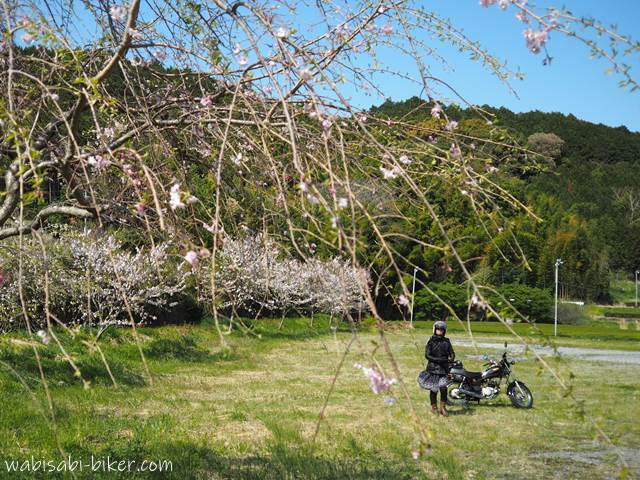桜とオートバイと自撮り