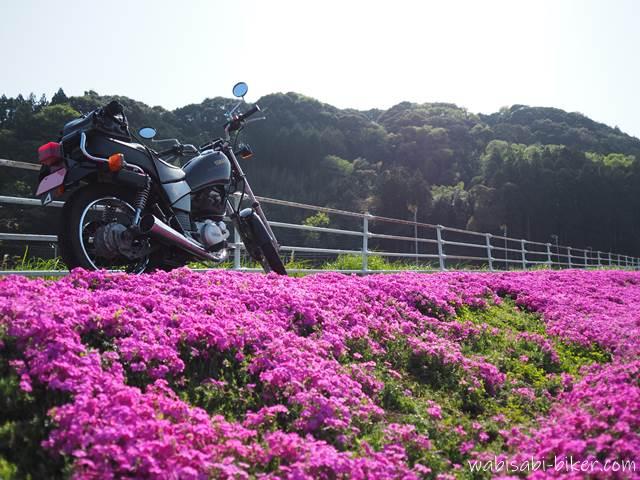芝桜とオートバイ